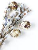 Ветви вербы весны цветя Стоковое Изображение RF