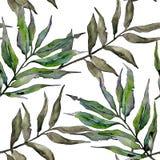 Ветви вербы в картине стиля акварели Стоковое Изображение