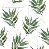 Ветви вербы в картине стиля акварели Стоковые Фотографии RF