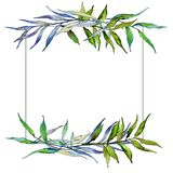 Ветви вербы в рамке стиля акварели Стоковое Изображение RF