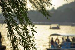 Ветви вербы и leaves& x27; сцена в летнем дворце Стоковая Фотография
