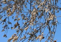 Ветви вербы с catkins стоковые изображения rf