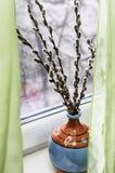 Ветви вербы Стоковая Фотография