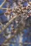 Ветви вербы Стоковые Фото
