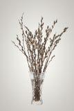 Ветви вербы pussy с цветя бутоном в вазе Стоковое Изображение