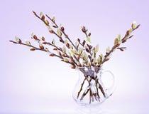 Ветви вербы pussy с цветя бутоном Стоковая Фотография RF