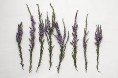 Ветви вереска с фиолетовыми цветками на предпосылке Стоковое Изображение