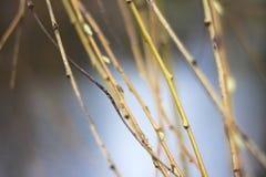 Ветви весеннего времени Стоковые Фотографии RF
