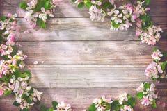 Ветви весны зацветая на деревянной предпосылке Стоковая Фотография