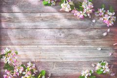 Ветви весны зацветая на деревянной предпосылке Стоковое фото RF