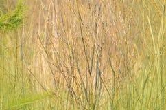 Ветви весны цветя вербы на зеленой предпосылке Стоковые Изображения