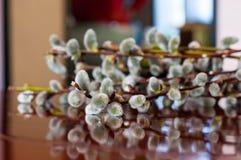 Ветви весны цветя вербы Catkins Пасха, предпосылка bokeh Стоковая Фотография RF
