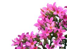 Ветви весны цветя Стоковая Фотография RF