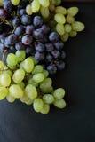 2 ветви виноградин на шифере Стоковое Изображение RF