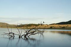Ветви в воде Стоковое фото RF