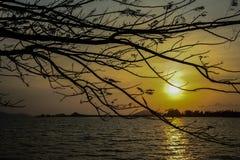 Ветви в заходе солнца стоковое изображение