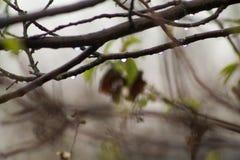 Ветви в древесине с падениями после дождя Стоковые Изображения RF
