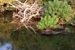 Ветви в реке Strymonas, Serres Греции Ландшафт осени стоковые фотографии rf