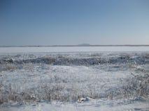 Ветви в снежке Стоковая Фотография