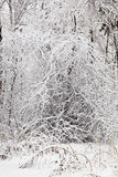 Ветви в снежке Стоковые Фотографии RF