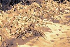 Ветви в снежке Стоковое Изображение RF