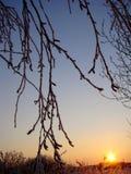 Ветви голубого захода солнца зимы, который замерли и блестящие Стоковое фото RF