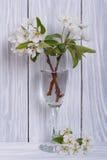 Ветви груши с цветками в стекле Стоковая Фотография RF