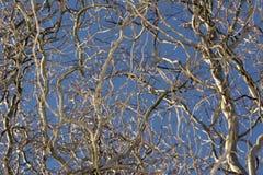 Ветви дерева в голубом небе Стоковая Фотография