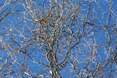Ветви дерева в голубом небе Стоковые Изображения RF