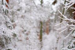 Ветви дерева в лесе зимы Стоковые Изображения