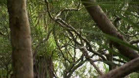 Ветви дерева в лесе акции видеоматериалы