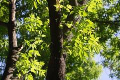 Ветви дерева в природе Стоковые Изображения