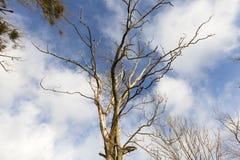 Ветви дерева в снеге Стоковые Изображения