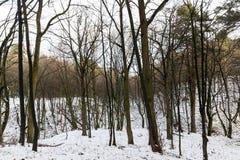 Ветви дерева в снеге Стоковая Фотография