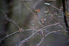 ветви дерева в тумане с серой предпосылкой неба Закройте вверх по взгляду Селективный фокус Стоковые Изображения RF