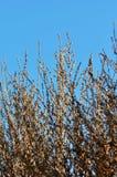 Ветви дерева зимы в солнечности утра Стоковые Изображения