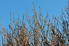 Ветви дерева зимы в солнечности утра Стоковая Фотография RF