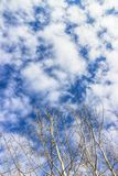 Ветви дерева и красивое голубое небо с белыми облаками Стоковое фото RF