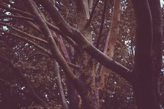 Ветви дерева клена Стоковая Фотография