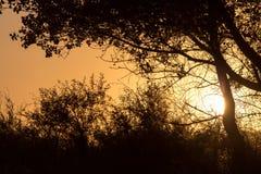 Ветви дерева на заходе солнца Стоковое Изображение RF