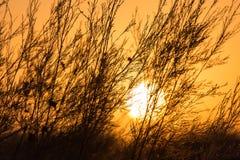 Ветви дерева на заходе солнца Стоковое Изображение