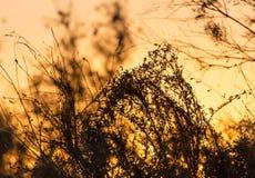 Ветви дерева на заходе солнца Стоковая Фотография