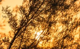 Ветви дерева на заходе солнца Стоковые Фото