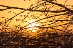 Ветви дерева на заходе солнца Стоковые Изображения
