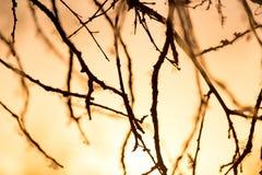 Ветви дерева на заходе солнца Стоковое фото RF