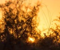 Ветви дерева на заходе солнца Стоковое Фото