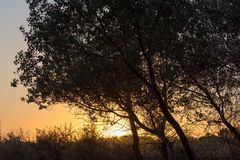 Ветви дерева на заходе солнца Стоковые Фотографии RF