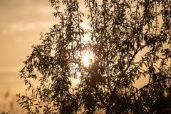 Ветви дерева на заходе солнца Стоковые Изображения RF