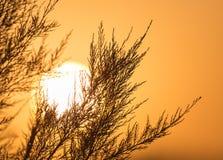 Ветви дерева на заходе солнца Стоковая Фотография RF