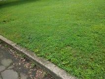 Ветви дерева на зеленой траве около пути или дороги асфальта Стоковые Изображения RF